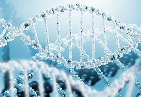 Biorrelatividad y Memoria Celular