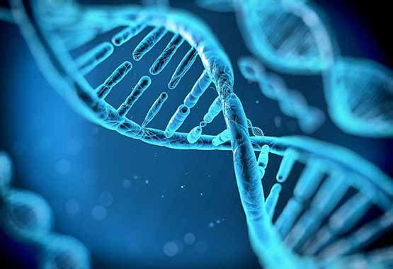 Memoria celular Activación de dones y descodificación de estructuras limitantes